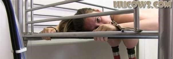 Vina  Milking Bed, Cow Milker -  (FullHD)